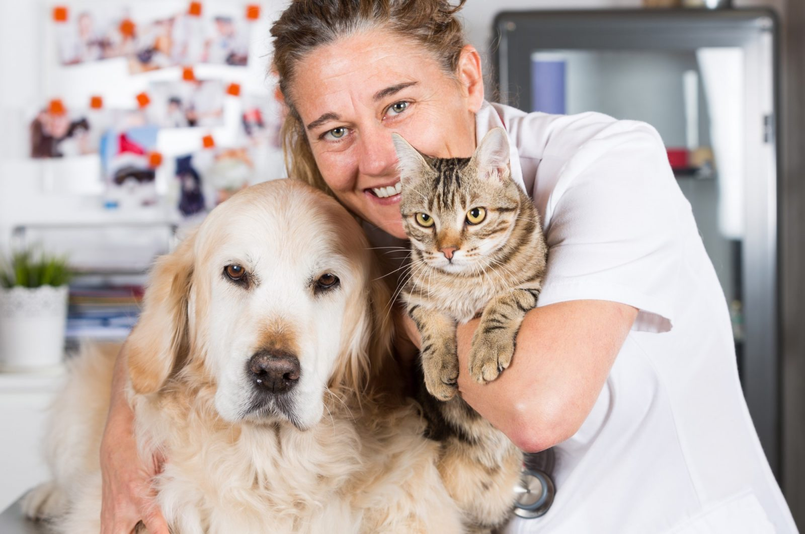 Veterinarian holding a dog and a cat